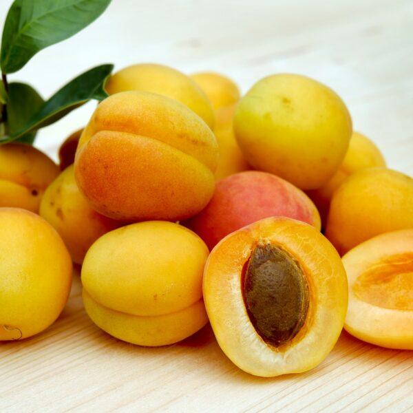 Aprikosenkernöl BIO SanaBio Lieferant