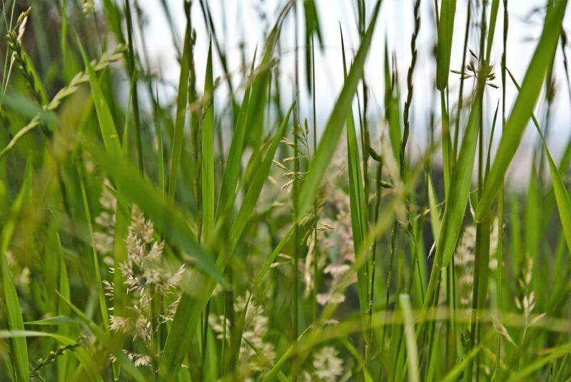 Wiesengräser Gewürz BIO SanaBio Lieferant