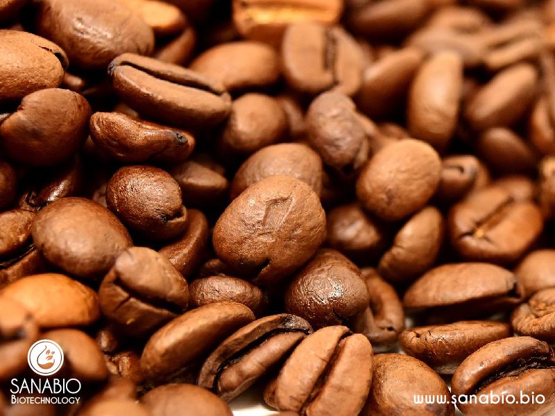 Kaffee Extrakt BIO SanaBio Lieferant