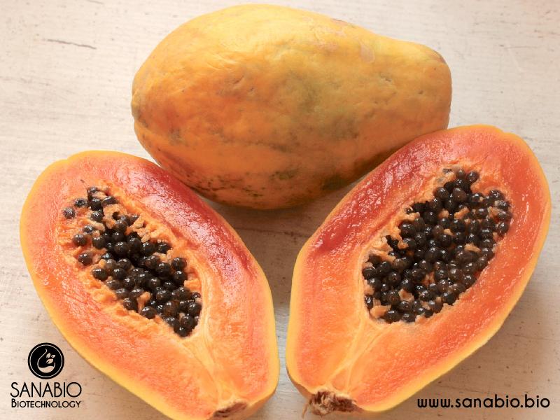 Papaya Extrakt BIO SanaBio Lieferant