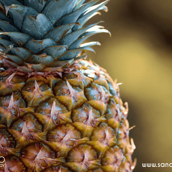 Organic pineapple extract